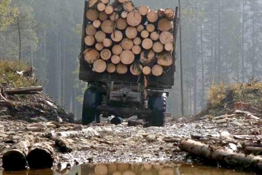 Read more about the article Чи є майбутнє в запорізьких лісів?