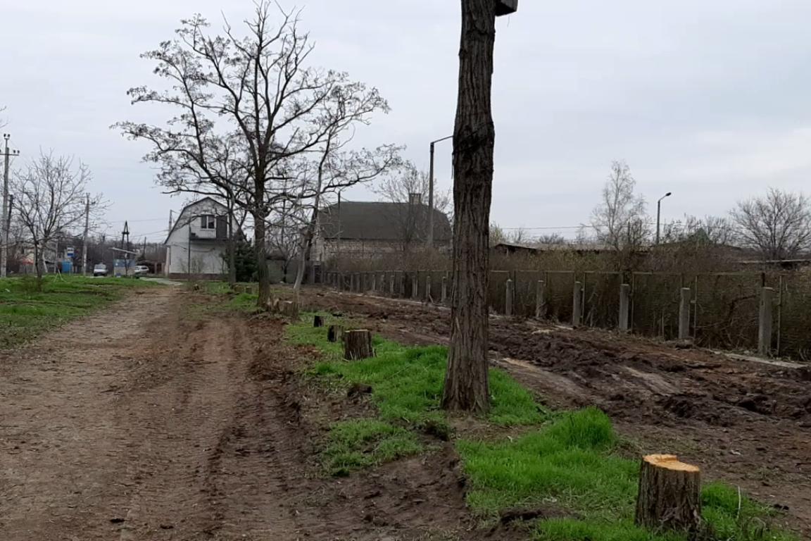 В микрорайоне АКЗ массово уничтожаются деревья
